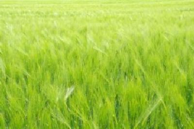 a-fost-stabilit-cuantumul-platilor-directe-unice-pe-suprafata-a-platilor-separate-pentru-zahar-si-a-platilor-specifice-pentru-orez