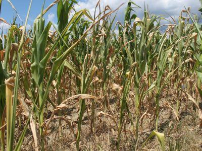 despagubirile-pentru-fermierii-afectati-de-seceta-vor-fi-platite-pana-la-craciun