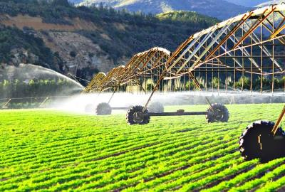 schimbarile-climatice-aduc-noi-investitii-in-agricultura-romaneasca