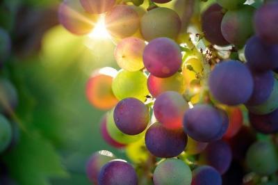 apia-accepta-solicitari-pentru-ajutorul-de-stat-din-sectorul-vitivinicol