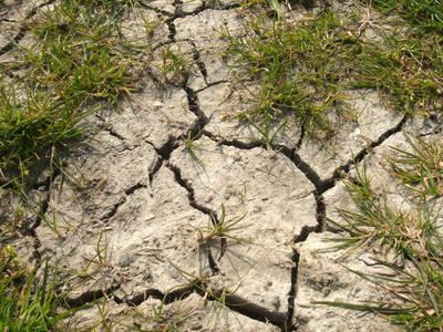 inca-nu-este-clar-modul-in-care-fermierii-calamitati-de-seceta-vor-primi-despagubirile-promise-de-guvern