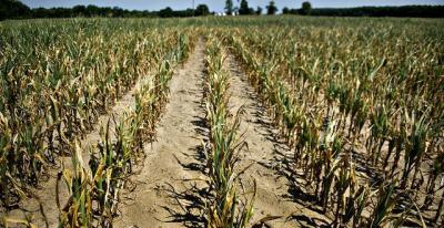madr-fermierii-afectati-de-seceta-au-timp-limitat-pentru-a-depune-cererile
