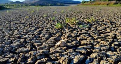 fermierii-care-au-culturi-afectate-de-seceta-ar-putea-fi-despagubiti