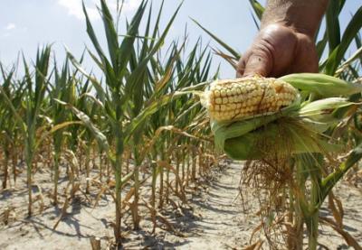 seceta-a-provocat-pierderi-de-20-sectorului-agricol-spune-ministrul