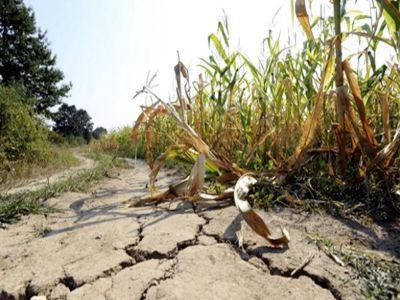 ce-trebuie-sa-faca-fermierii-afectati-de-seceta-pentru-a-primi-despagubiri