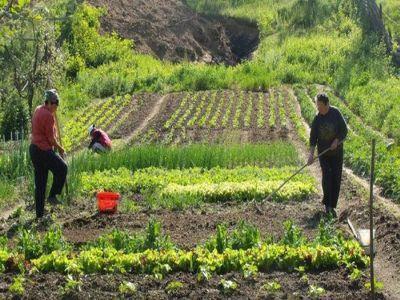 care-sunt-noile-plafoanele-financiare-pentru-sprijinul-cuplat-in-sectorul-vegetal