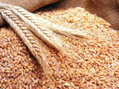 cu-ce-tratam-semintele-din-culturile-de-primavara-pentru-a-preveni-aparitia-unor-boli