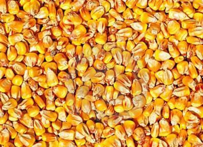 fermierii-romani-vor-despagubiri-din-partea-ue-pentru-interzicerea-neonicotinoidelor