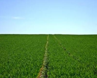 agricultura-in-2017-5-idei-de-afaceri-profitabile