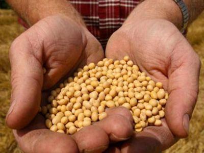 ce-tratamente-fitosanitare-trebuie-aplicate-semintelor-din-culturile-de-primavara