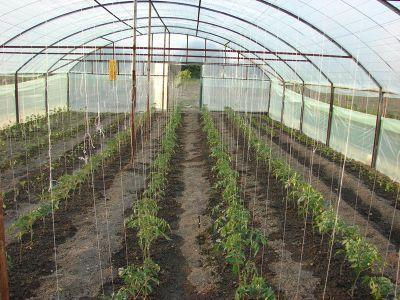 peste-6000-de-cereri-depuse-pentru-ajutorul-acordat-fermierilor-care-cultiva-tomate-in-sere-si-solarii