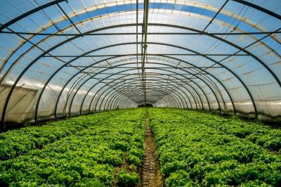 ce-recomandari-te-ajuta-sa-obtii-o-cultura-de-legume-sanatoasa