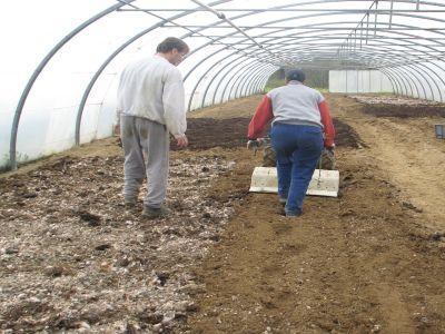 pregatirea-solului-din-sere-pentru-noile-culturi