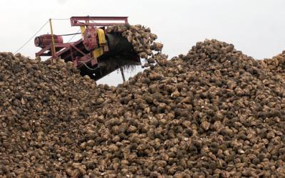 realocarea-cotelor-de-zahar-va-oferi-stabilitate-cultivatorilor-romani-de-sfecla
