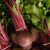 Sfecla rosie - Beta vulgaris