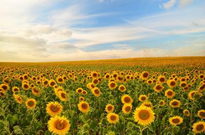 rotatia-culturilor-3-plante-pentru-care-acest-proces-este-extrem-de-important