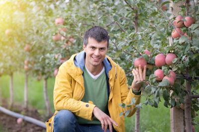 cum-sa-prelucrezi-fructele-din-livada-cu-o-investitie-mica-5-metode-diferite