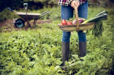 cum-ii-recunoti-i-cum-ii-protejezi-gradina-de-legume-impotriva-principalilor-daunatori