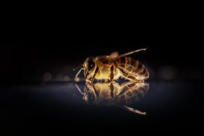 sindicatul-apicultorilor-vrem-o-subventie-mai-mare