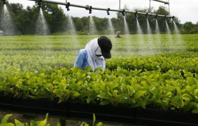 ministerul-agriculturii-lanseaza-un-termen-de-doi-ani-pentru-refacerea-infrastructurii-de-irigatii