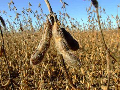 am-aflat-duminica-vom-cultiva-plante-modificate-genetic
