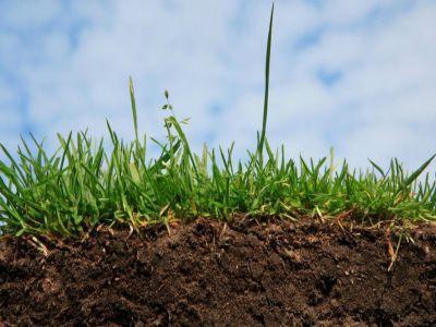 organizatia-pentru-alimentatie-si-agricultura-a-declarat-2015-anul-international-al-solului