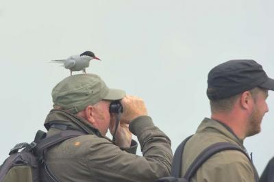 sor-anunta-maraton-ornitologic-la-agigea