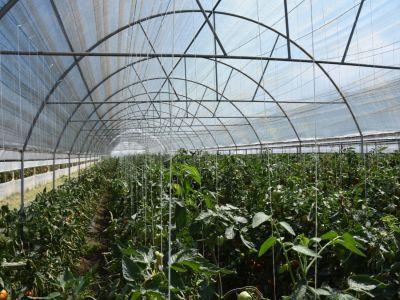 recomandari-pentru-combaterea-daunatorilor-in-culturile-de-legume-din-spatii-protejate