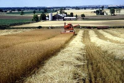 brasov-masura-141-sprijinirea-fermelor-agricole-de-semi-subzistenta-pana-pe-17-august