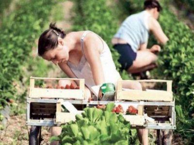 ce-beneficii-vor-avea-fermierii-care-angajeaza-ucenici-sau-stagiari