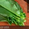 Istoria legumelor: Stevia, barbarie de primavara