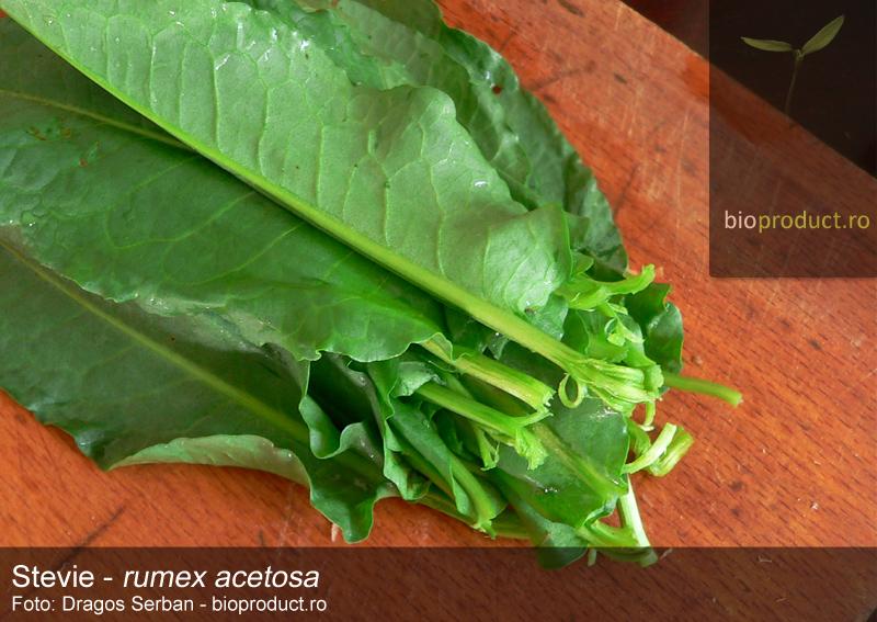 istoria-legumelor-stevia-barbarie-de-primavara