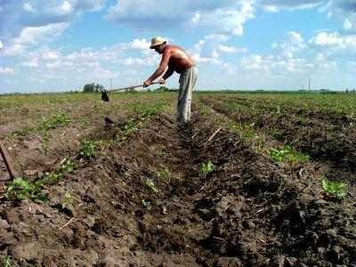 vom-avea-in-sfarsit-o-strategie-pe-termen-lung-in-agricultura