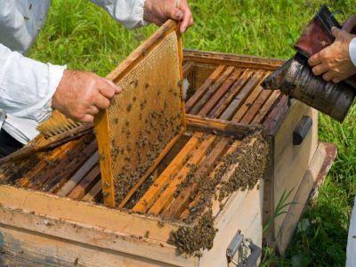metode-de-combatere-a-daunatorilor-naturali-pentru-stupii-de-albine