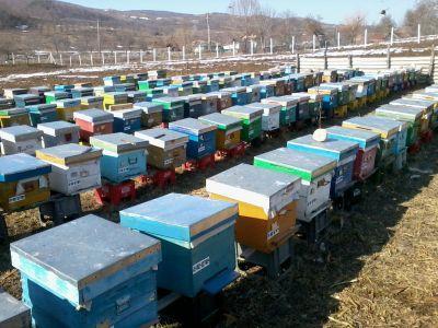 combaterea-principalilor-daunatori-pentru-stupii-de-albine