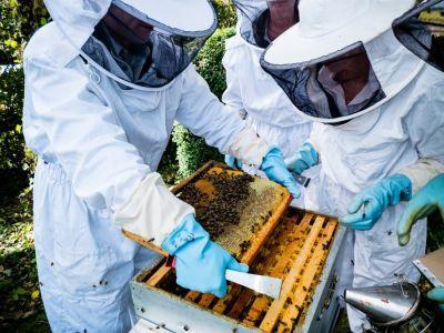 ajutor-de-minimis-de-15-lei-pe-familia-de-albine-pentru-apicultori