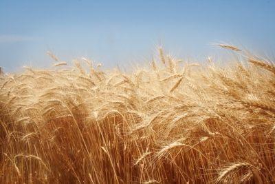 stabilirea-subventiei-pe-suprafata-pentru-2013-amanarea-datoriilor-fermierilor-catre-bugetul-de-stat-si-subventionarea-accizei-la-motorina