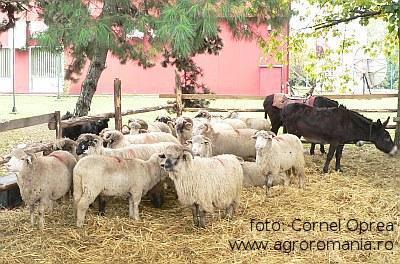situatia-actualizata-a-subventiilor-pentru-animale-in-judetul-vrancea-2012-2013