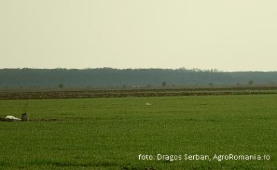 reprezentantii-fermierilor-cer-cu-insistenta-respectarea-promisiunii-privind-cuantumul-subventiei-pe-suprafata