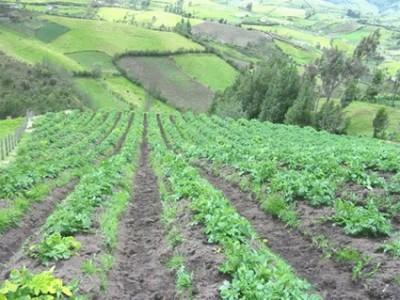 subventia-pentru-agricultura-ecologica-poate-fi-ceruta-pana-la-15-octombrie
