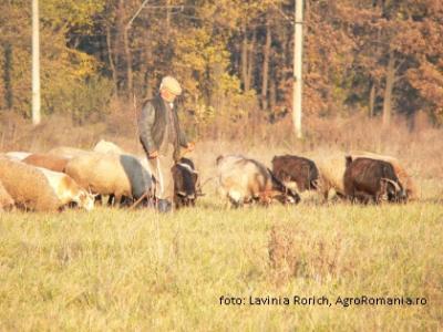 peste-zece-mii-de-fermieri-bistriteni-primesc-subventia-pentru-bovine-ovine-si-caprine