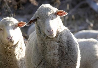 a-fost-modificata-hg-nr-9752011-privind-modul-de-acordare-a-subventiei-pentru-ameliorarea-raselor-de-animale