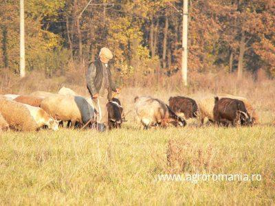cec-lanseaza-creditul-dedicat-crescatorilor-de-ovine-si-caprine-beneficiari-ai-subventiilor-pe-cap-de-animal