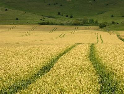 subventia-pe-suprafata-2012-apia-a-anuntat-astazi-ca-au-fost-facute-plati-catre-un-milion-de-fermieri