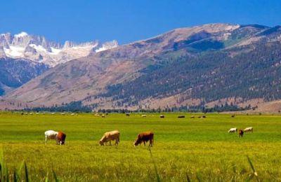 subventii-agricultura-2013-ultima-zi-de-depunere-a-cererii-pentru-crescatorii-de-vaci-din-zone-defavorizate