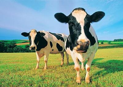 schema-de-ajutor-specific-acordat-producatorilor-de-lapte-si-de-carne-de-vita-din-zonele-defavorizate