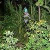 Survivor - ratacit in jungla (din spatele casei)