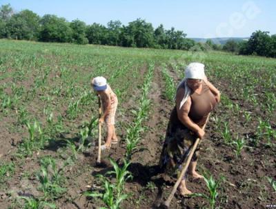 agrostar-sustine-combaterea-muncii-la-negru-si-imbunatatirea-conditiilor-de-munca-pentru-angajatii-din-sectorul-agricol