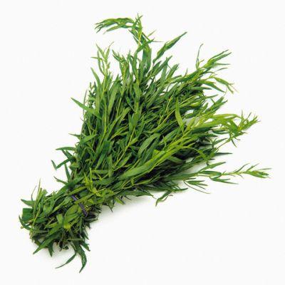 tarhonul-un-condiment-care-inlocuieste-sarea