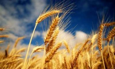 prelungirea-aplicarii-taxarii-inverse-la-cereale-a-fost-refuzata-de-ce